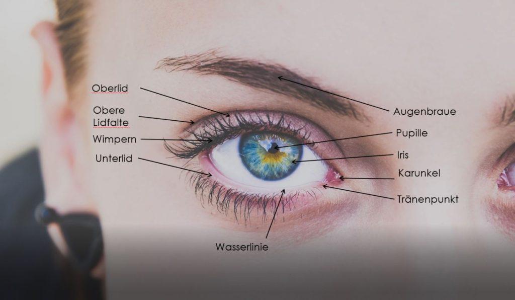 Anatomie beim Auge zeichnen