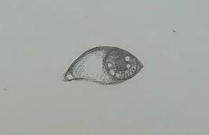 Auge zeichnen Schritt 5